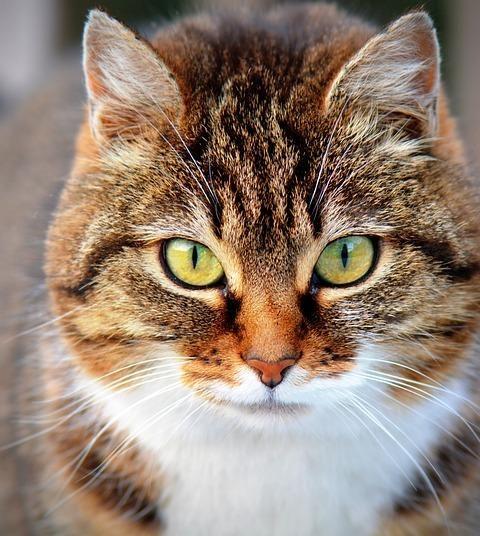 Nahles Katze